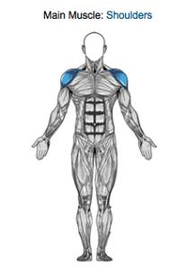肩の筋肉図
