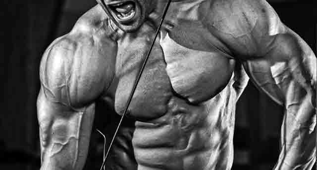 成長ホルモンの分泌でできた筋肉