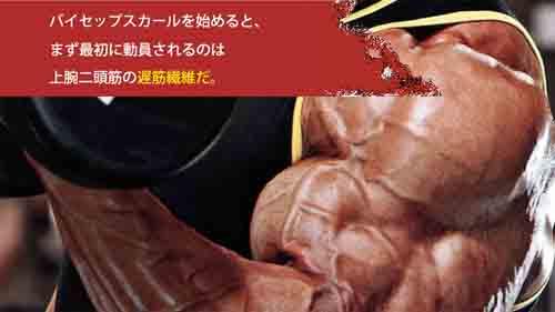 筋肉サイズの問題