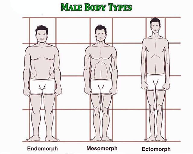 体のタイプの違い