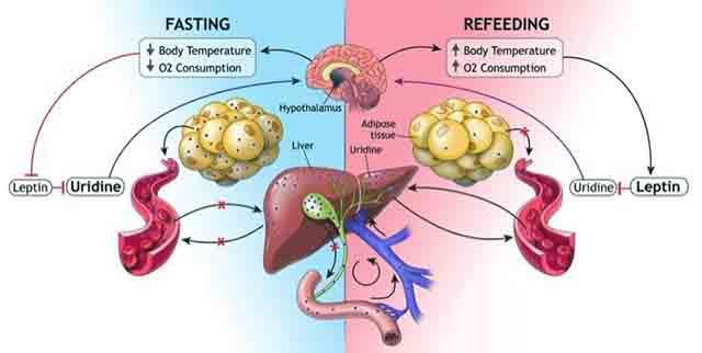 減量と内分泌の仕組み
