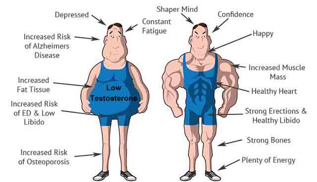 男性ホルモンの影響