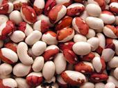 ファセオルスブルガリスの原料の白インゲン豆