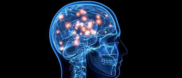脳の働きを助ける