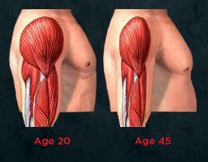 筋量を減らすミオスタチン