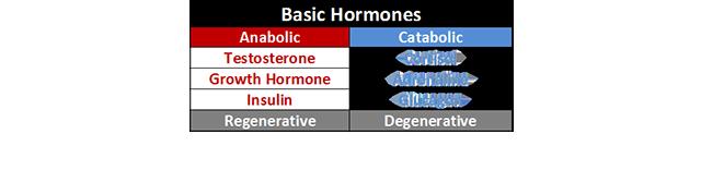 アナボリックホルモンとカタボリックホルモン