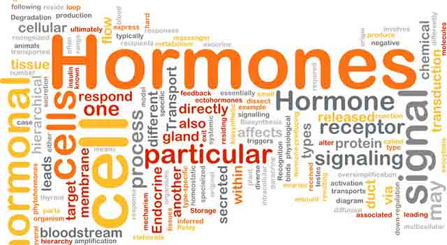 ホルモンのイメージ