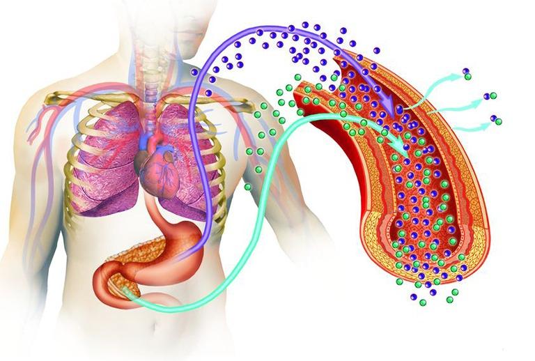 膵臓とインスリンの働きのイメージ図